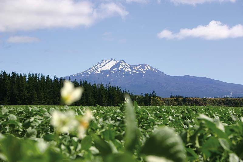 [Photo: Ohakune Farm]